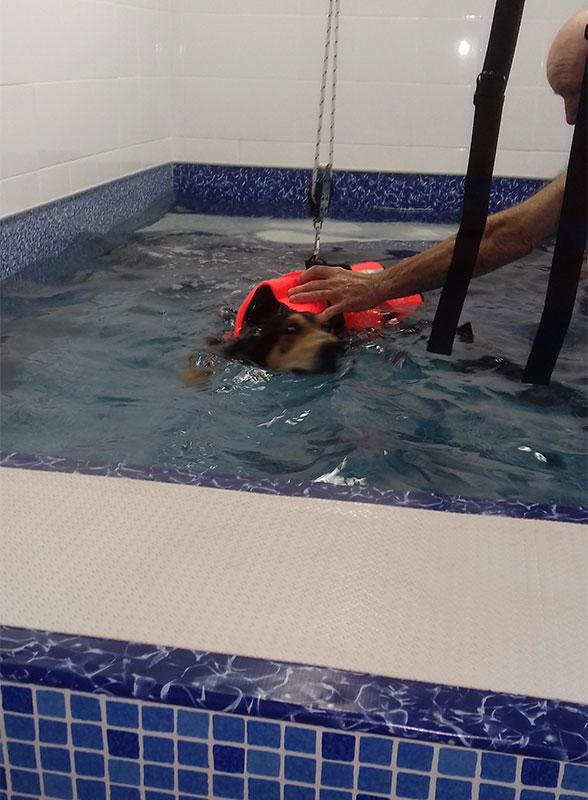 Ella is a former hunting dog who has bilateral hip dysplasia. Hydrotherapy makes her feel a lot better!